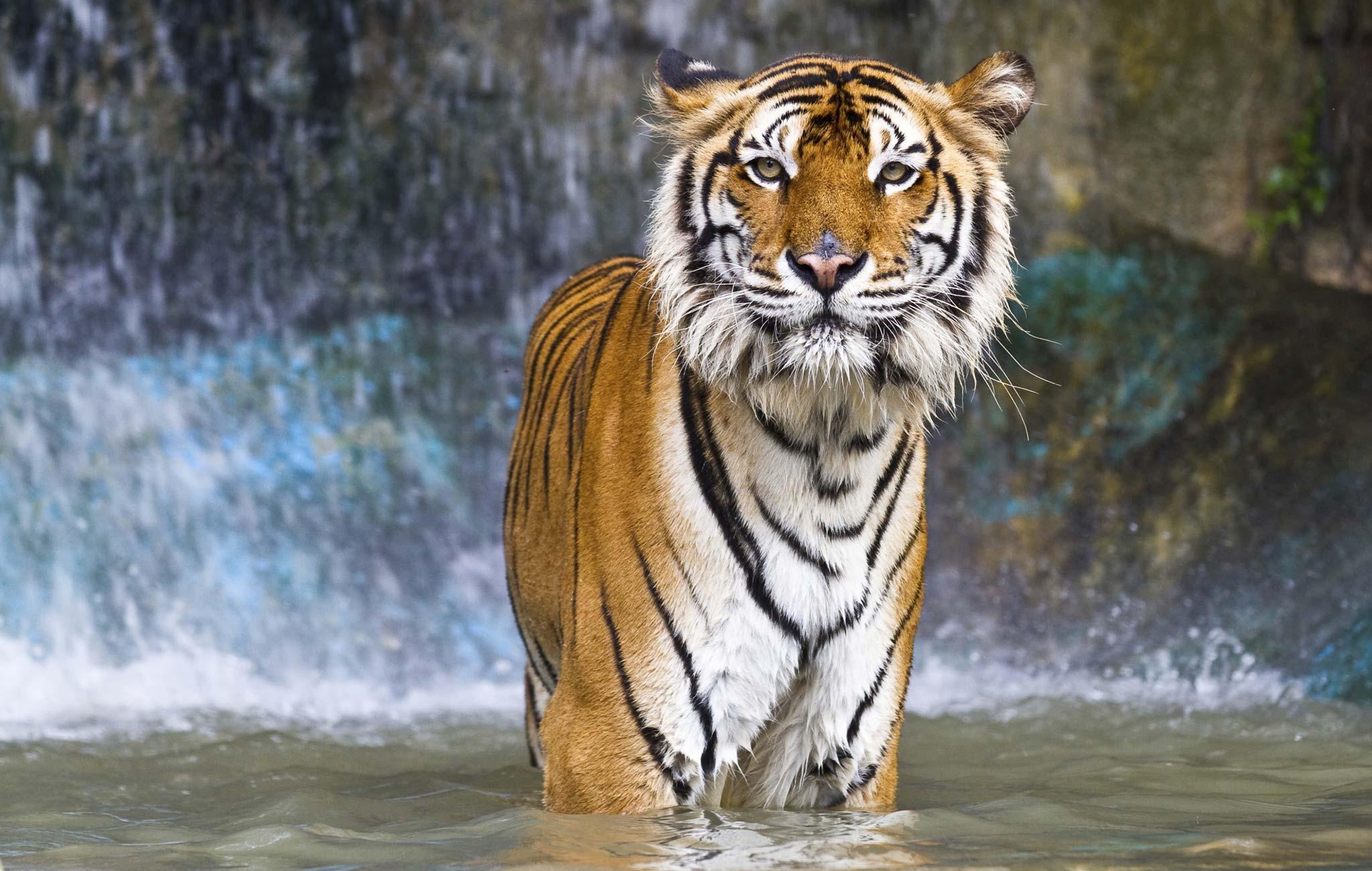 Hotels Near Memphis Zoo In Memphis Tn Choice Hotels
