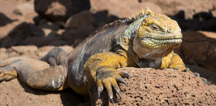 Day trip to North Seymour - Galapagos Tours by #ChokoTrip