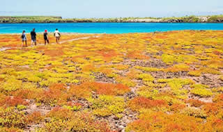 Day tour to South Plazas Island Galapagos
