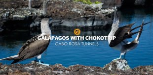Cabo Rosa Tunnels Isabela Island Galapagos