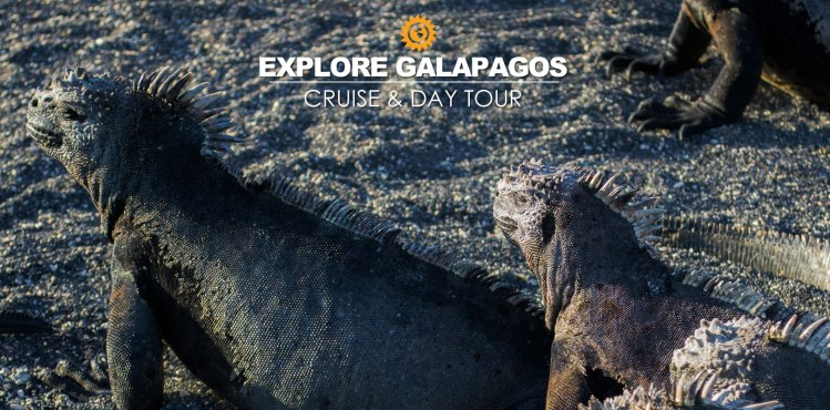 Galapagos Cruise travel packages and tours