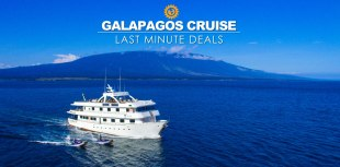 Last minute Galapagos cruise deals