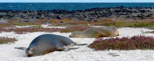 Sea lions on Mosquera Islet