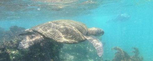 Snorkeling in Fernandina Island