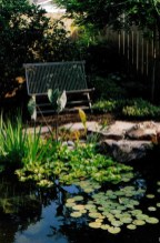 bench behind pond water feature in escondido small backyard landscape design