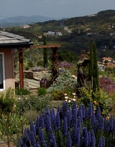 Sustainable Mediterranean Landscape In Bonsall