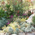 succulents and perennials adorn boulder