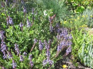 succulent perennials for the heat and low-water-use garden