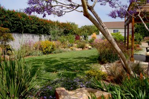 Drought resistant plants surround the lush play lawn.