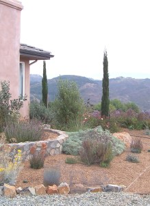 Bright summer light washes out the colors in the drought tolerant landscape