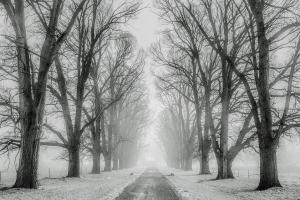 road between lines of trees