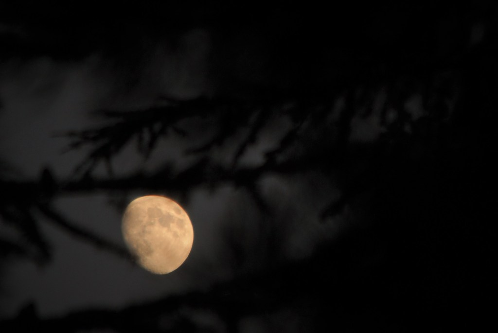 Moon through branches 2