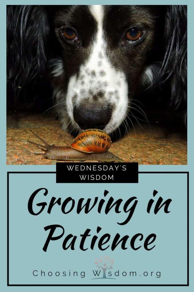 Growing in Patience - Choosing Wisdom