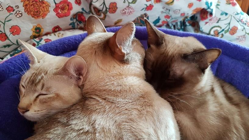 Monty, Saffy & Sylvia
