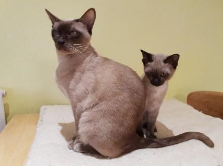 Saffy & Agatha