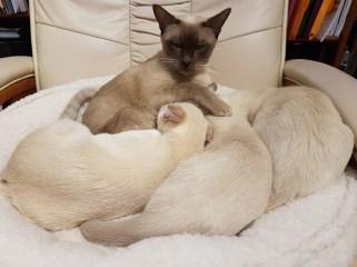 Saffy & Kittens