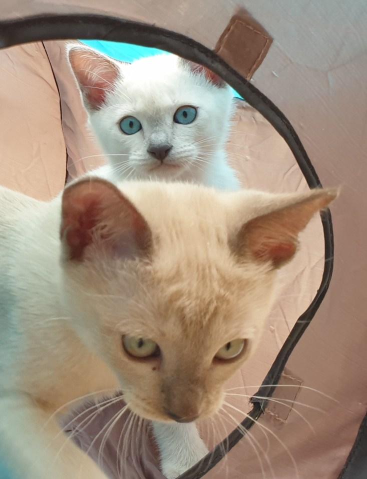 Lottie & Celia