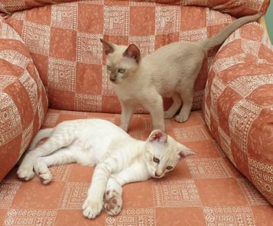 Dulcie & Celia