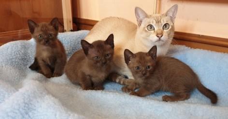 BCR Kittens