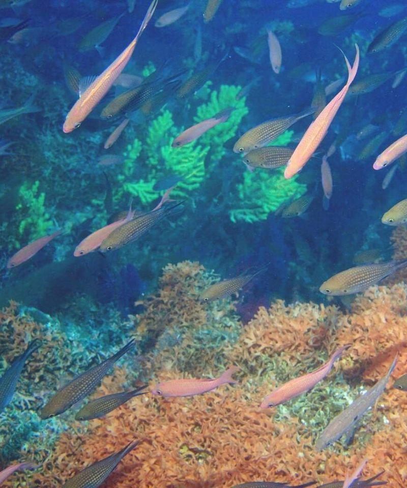 świat podwodny wyspy Lastovo