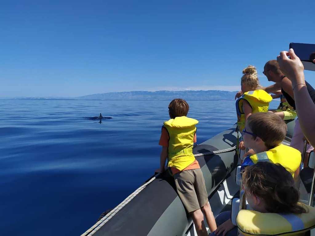 Do obserwacji delfinów trzeba się odpowiednio przygotować