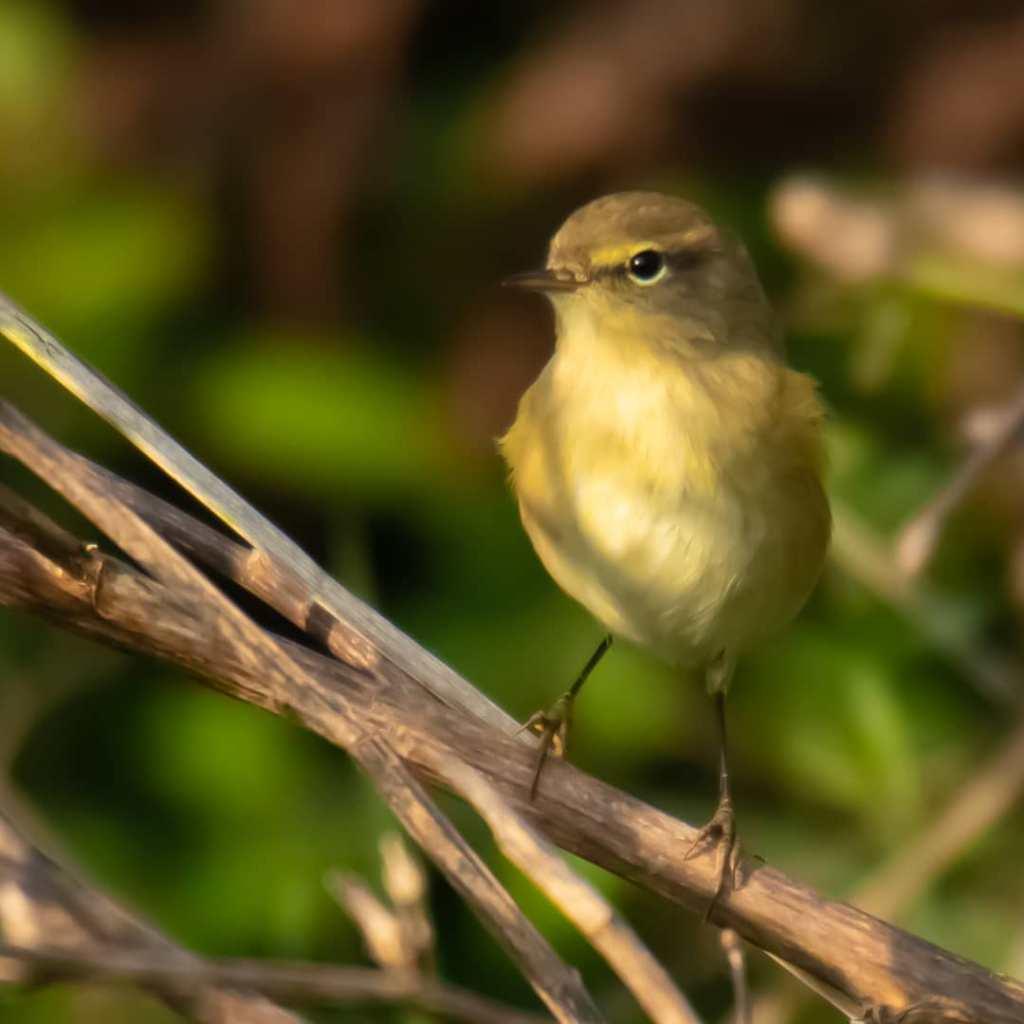 ptak w parku Palud