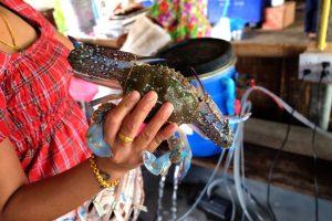 Crab Samut Sakhon