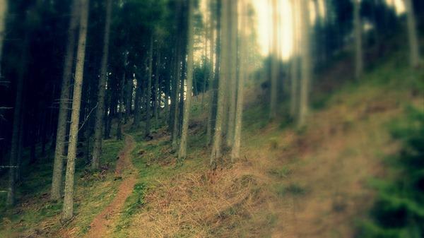 Mutterer Alm Mountain Bike trail