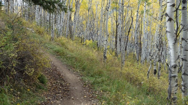 """The golden leaves were just starting to loose their grip of the branches above. We had a golden carpet of fresh dropped leaves that got swept up and carried with us as we """"shredded"""" the trail"""