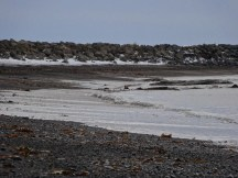 The beach was frozen solid - each wave leaving an icy trail on top of the sand as it receeded