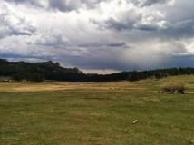 Elk hanging around in the meadows