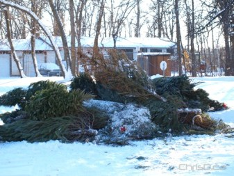 A pile of recycled Christmas trees sits in a drop off depot in this file photo. (CHRISD.CA)
