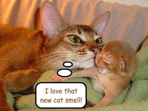 Cat Smell