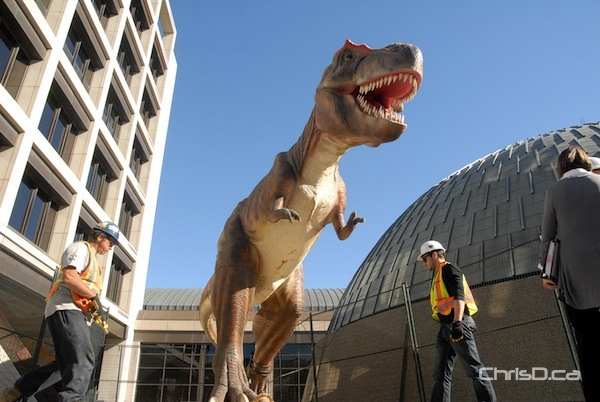 It's not Jurassic Park, but a life-sized Tyrannosaurus rex was placed in front of the Manitoba Museum on Wednesday. The creature promotes the upcoming Dinosaurs Unearthed exhibit, running October 6 to April 8, 2013. The dinosaur stands just over 15-feet tall and will greet visitors as they walk through the museum's courtyard. (STAN MILOSEVIC / CHRISD.CA)
