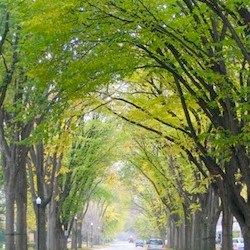 Trees Winnipeg Encourages People to Get Planting This Spring