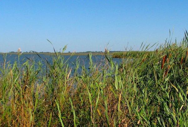 Delta Marsh