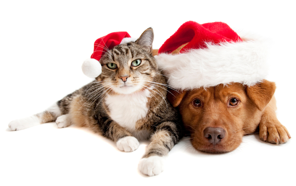 Christmas Animals - Cat Dog