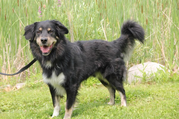 Taz the dog is available for adoption at the Winnipeg Humane Society. (WHS/HANDOUT)