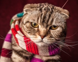 Cat - Scarf