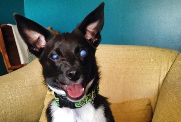 Percy - Dog