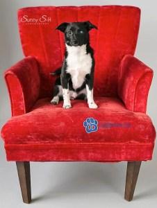 Percy Dog