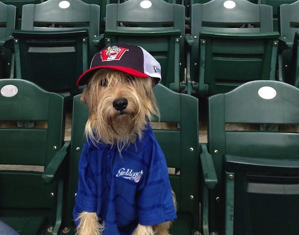 Winnipeg Goldeyes - Bark in the Park