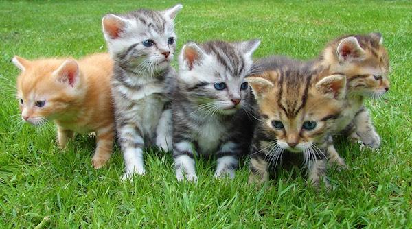 Kittens - Cats