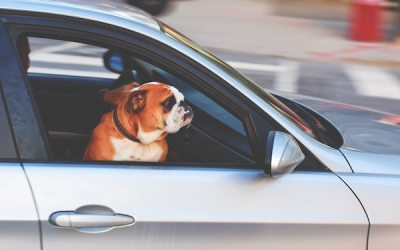 Humane Society Reminds Vehicle Owners Not to Leave Pets in Hot Cars