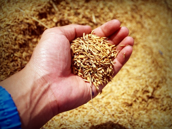 Farmer Grain