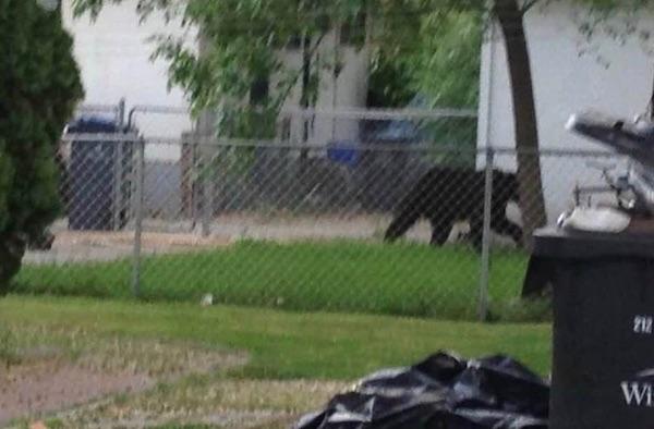 Transcona Bear