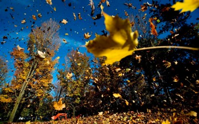 Lengthy, Enjoyable Fall Ahead for Most of Canada, Weather Network Predicts