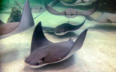 Humane Society Calls for Closure of Stingray Exhibit at Assiniboine Park Zoo