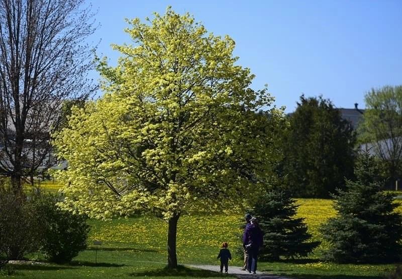 Flowers - Trees