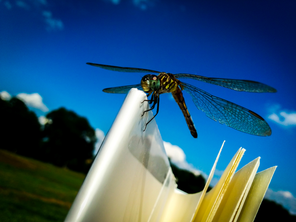 Dragonfly Centennial Park Nashville
